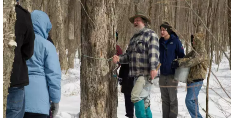 41st Public Maple Sugaring Day (1)